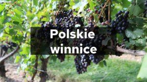 Polskie winnice