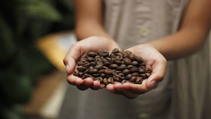najdroższe kawy świata