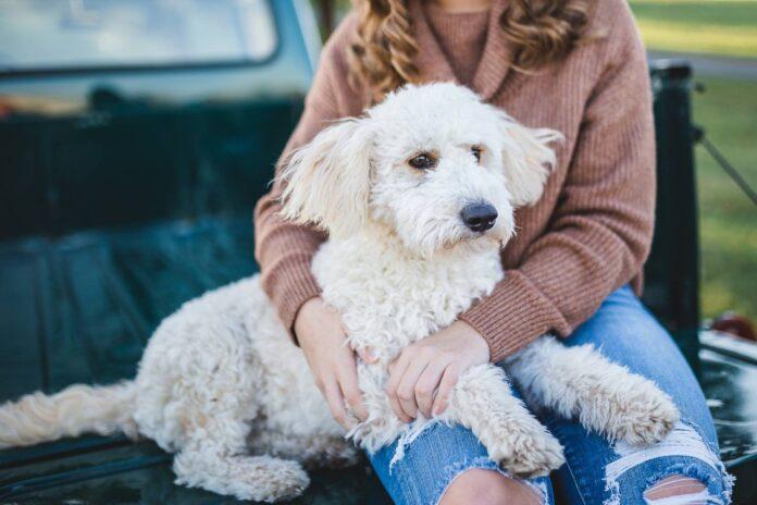 Pies z kobietą