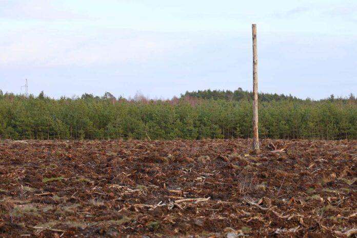 Las, w którym przeprowadzono wycinkę drzew