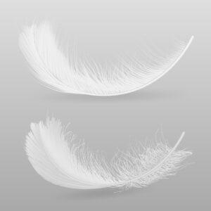Ptasie pióra
