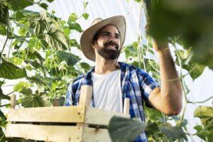 Zbiory roślin na farmie ekologicznej