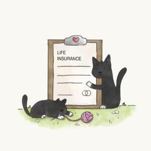 Ubezpieczenie i koty