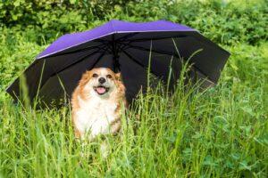 Pies pod parasolem