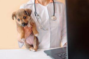Weterynarz bada psa przed czipowaniem