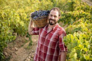 Mężczyzna pracujący na zbiorach winogron w ramach pracy sezonowej